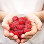 hands-holding-ripe-raspberries-16652138